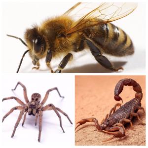 insectos picadores