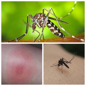 molesta picadura del mosquito tigre